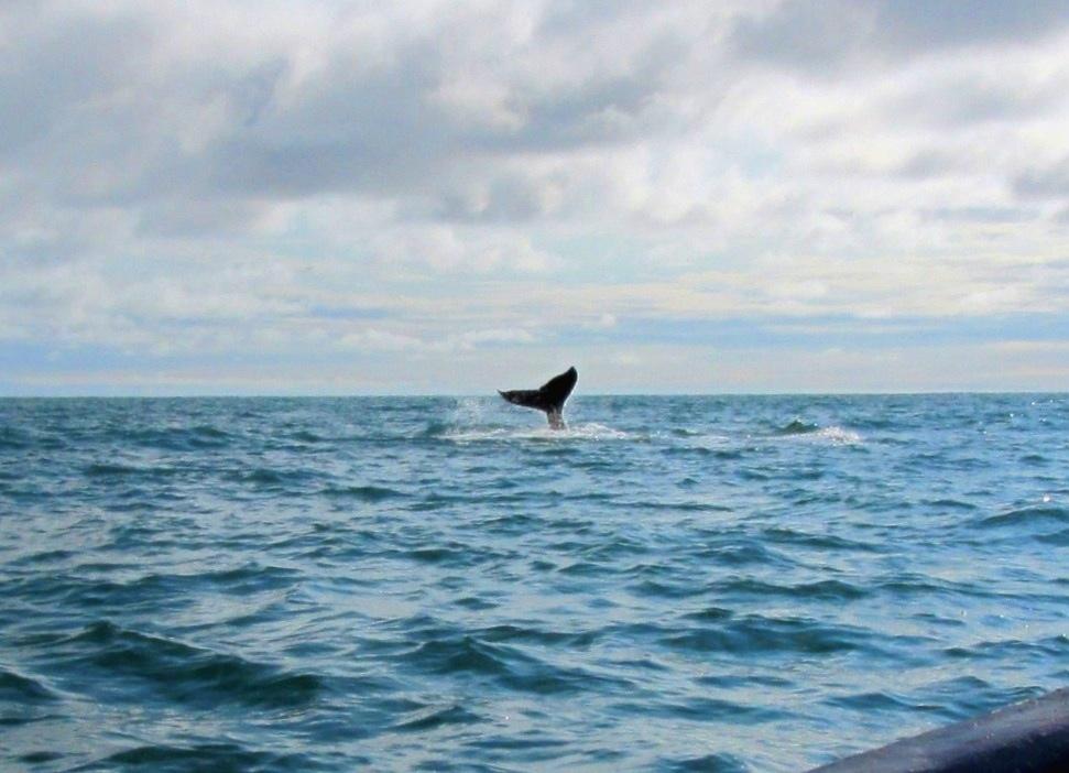 Ausflug an die Pazifikküste – Walegucken