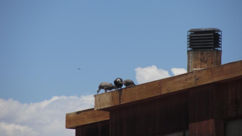 ...auf dem Hoteldach