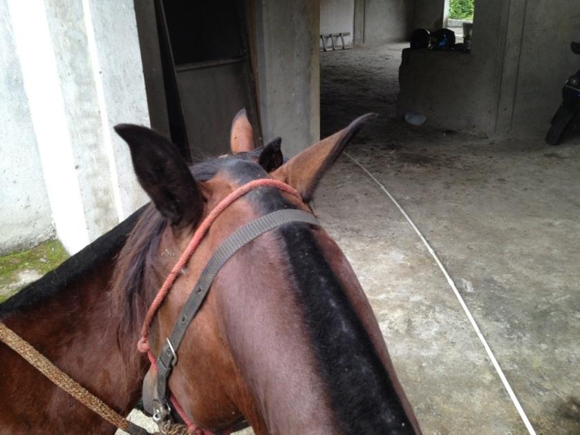 Blick übers Pferd in die Garage.