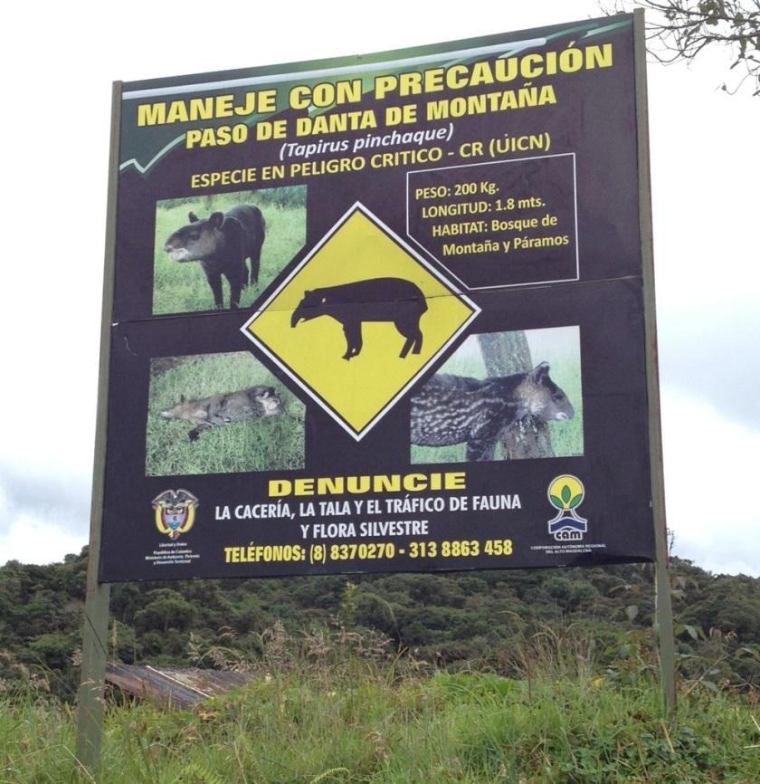 Vorsicht: Tapir kreuzt!!!