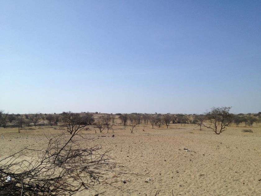 In der Sechura-Wüste