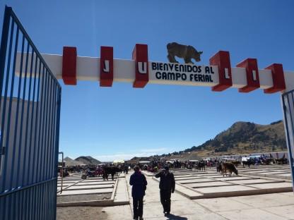 Bullenmarkt am Titicaca-See
